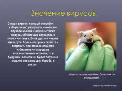 Открыт вирион, который способен избирательно разрушать некоторые опухоли мыше...