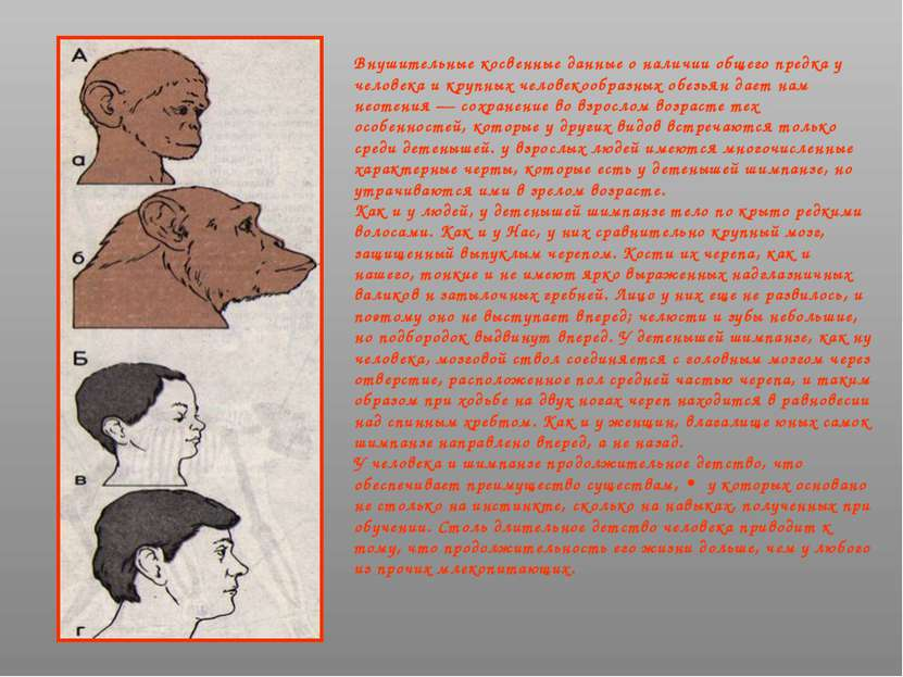 Внушительные косвенные данные о наличии общего предка у человека и крупных че...