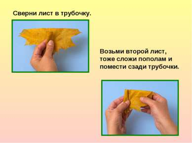 Сверни лист в трубочку. Возьми второй лист, тоже сложи пополам и помести сзад...