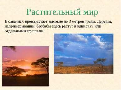Растительный мир В саваннах произрастает высокие до 3 метров травы. Деревья, ...