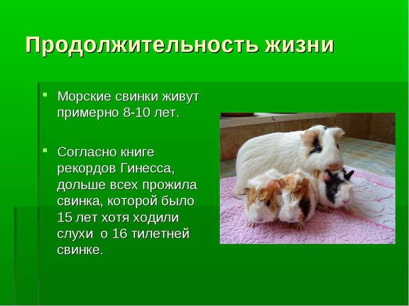 Продолжительность жизни Морские свинки живут примерно 8-10 лет. Согласно книг...