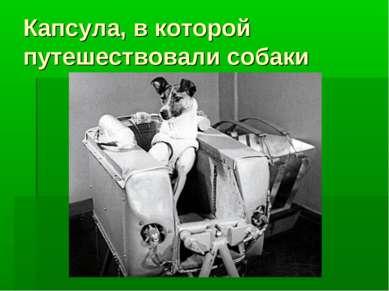 Капсула, в которой путешествовали собаки