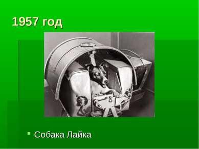 1957 год Собака Лайка