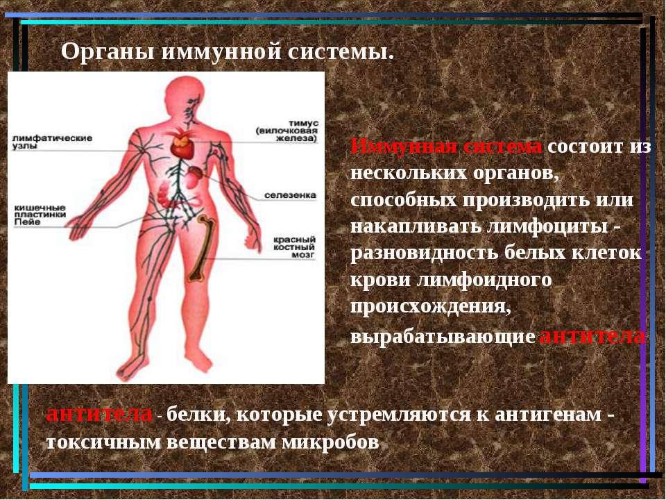 Органы иммунной системы. Иммунная система состоит из нескольких органов, спос...