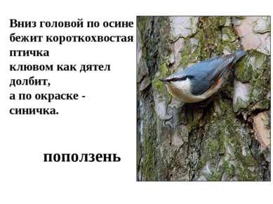 Вниз головой по осине бежит короткохвостая птичка клювом как дятел долбит, а ...