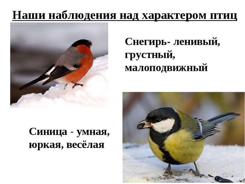 Наши наблюдения над характером птиц Снегирь- ленивый, грустный, малоподвижный...