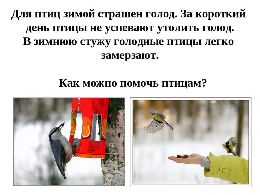 Для птиц зимой страшен голод. За короткий день птицы не успевают утолить голо...