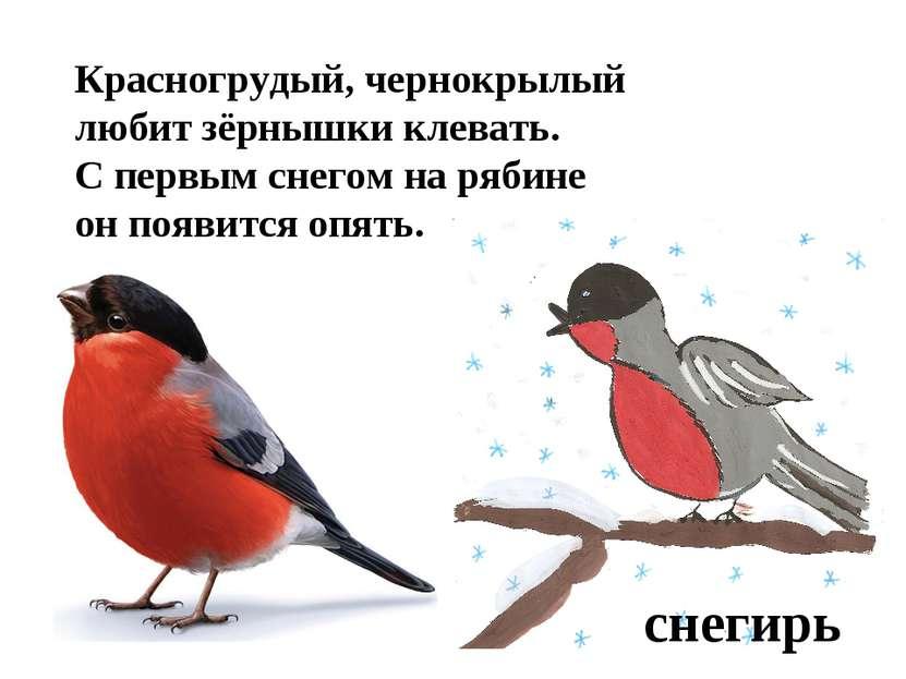 Красногрудый, чернокрылый любит зёрнышки клевать. С первым снегом на рябине о...