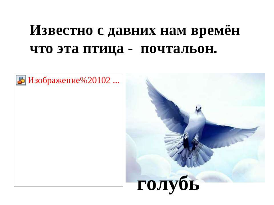 Известно с давних нам времён что эта птица - почтальон. голубь