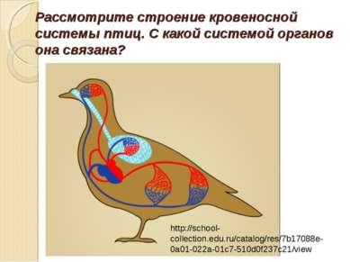 Рассмотрите строение кровеносной системы птиц. С какой системой органов она с...