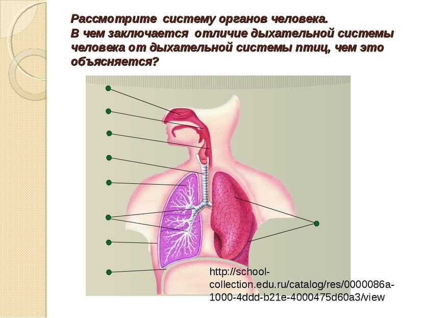 Рассмотрите систему органов человека. В чем заключается отличие дыхательной с...