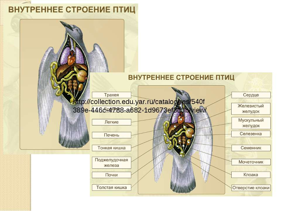 http://collection.edu.yar.ru/catalog/res/540f389e-446c-4788-a682-1d9673ef3d0b...