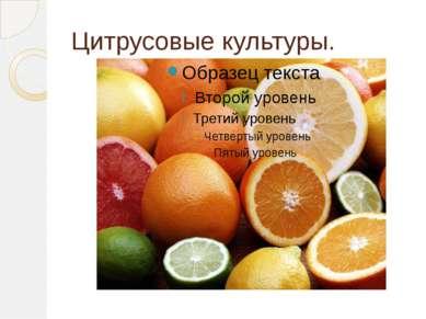 Цитрусовые культуры.