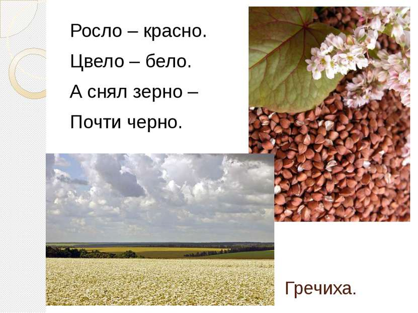 Гречиха. Росло – красно. Цвело – бело. А снял зерно – Почти черно.