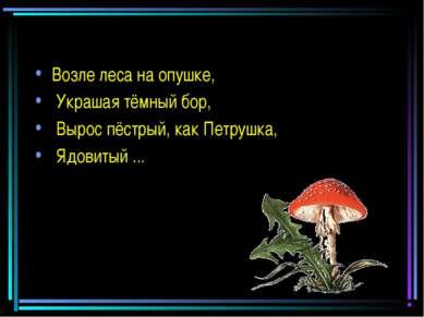 Возле леса на опушке, Украшая тёмный бор, Вырос пёстрый, как Петрушка, Ядовит...
