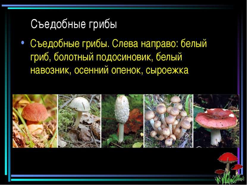 Съедобные грибы Съедобные грибы. Слева направо: белый гриб, болотный подосино...