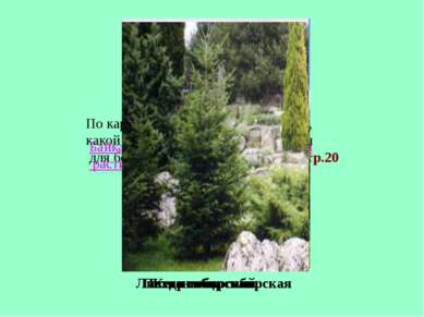 По карте растительности определите, какой тип растительности характерен для б...