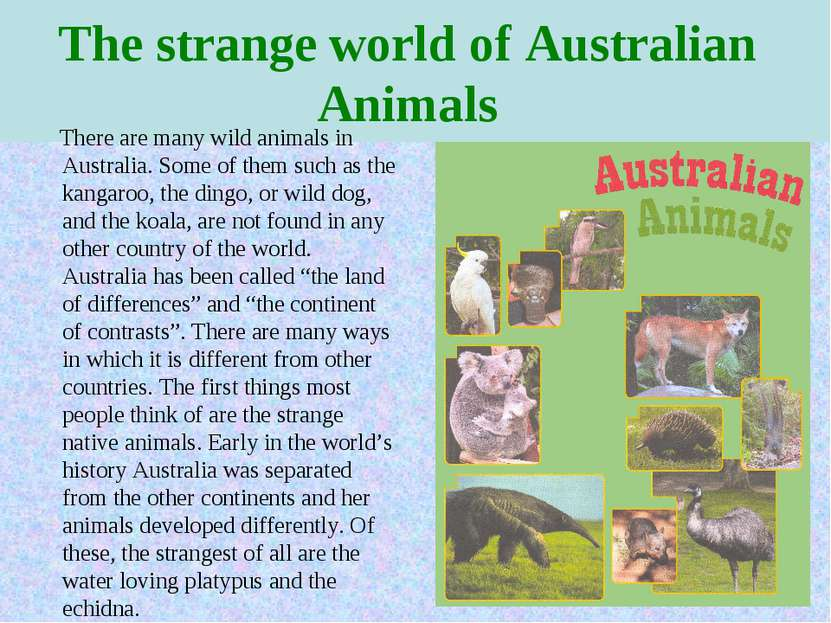 The strange world of Australian Animals There are many wild animals in Austra...