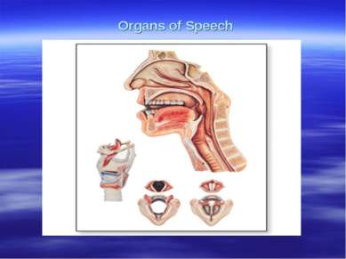 Organs of Speech работ