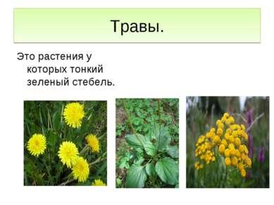 Травы. Это растения у которых тонкий зеленый стебель.