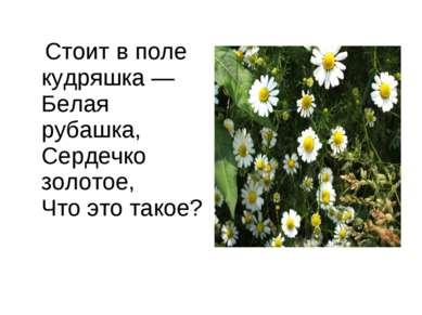 Стоит в поле кудряшка — Белая рубашка, Сердечко золотое, Что это такое?