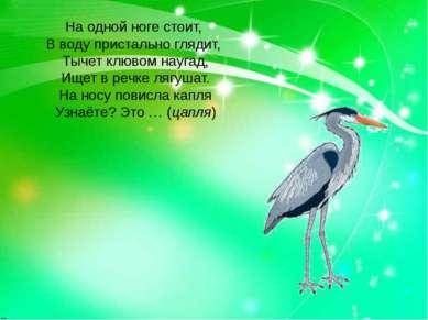 На одной ноге стоит, В воду пристально глядит, Тычет клювом наугад, Ищет в ре...