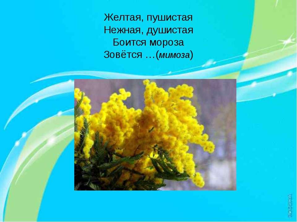 Желтая, пушистая Нежная, душистая Боится мороза Зовётся …(мимоза)