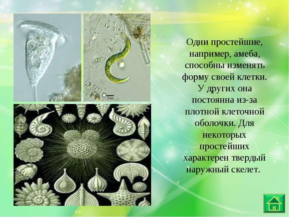 Одни простейшие, например, амеба, способны изменять форму своей клетки. У дру...