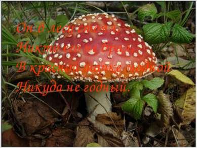 Он в лесу стоял, Никто его не брал, В красной шапке модной Никуда не годный.