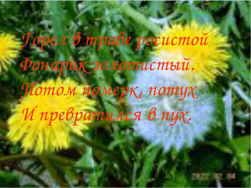 Горел в траве росистой Фонарик золотистый. Потом померк, потух И превратился ...