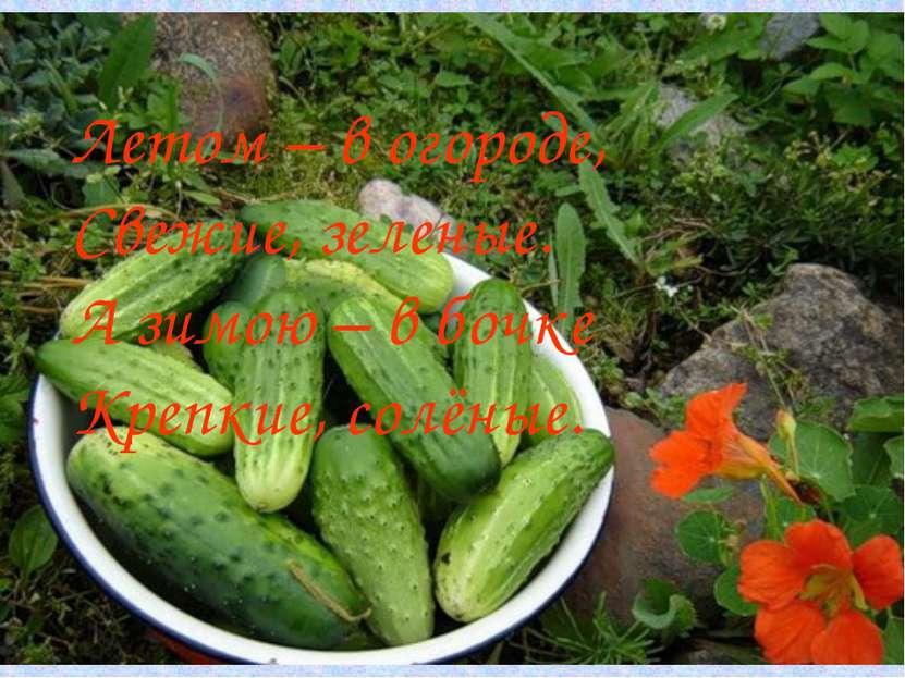 Летом – в огороде, Свежие, зеленые. А зимою – в бочке Крепкие, солёные.