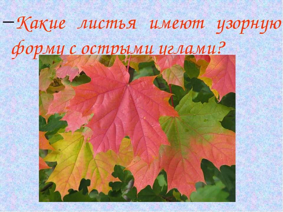 Какие листья имеют узорную форму с острыми углами?