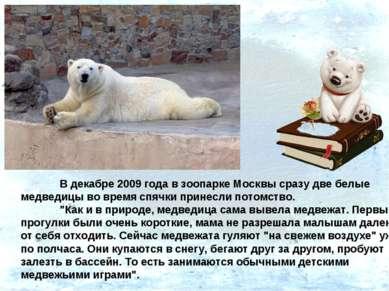 В декабре 2009 года в зоопарке Москвы сразу две белые медведицы во время спяч...