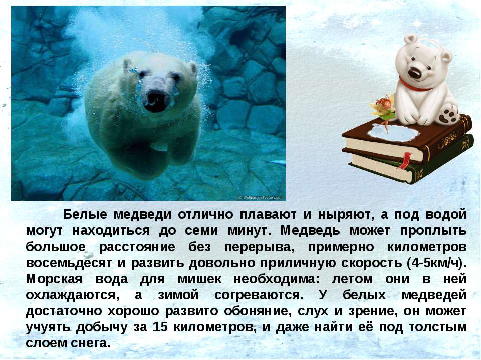Белые медведи отлично плавают и ныряют, а под водой могут находиться до семи ...