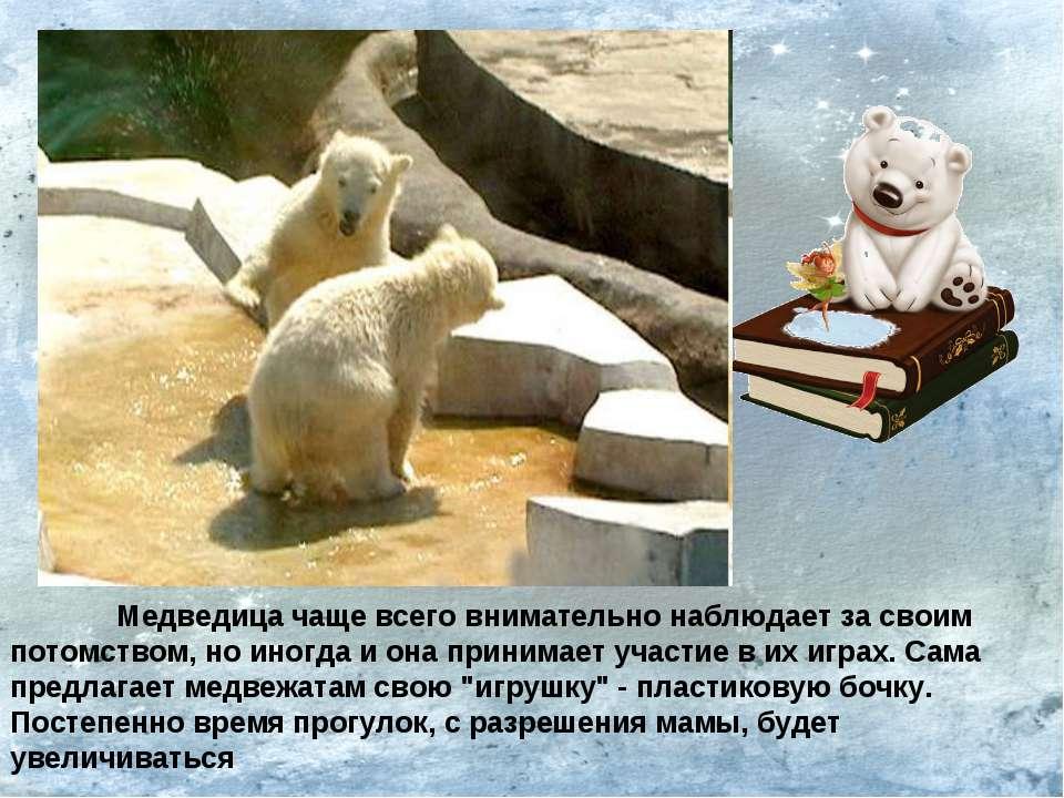 Медведица чаще всего внимательно наблюдает за своим потомством, но иногда и о...