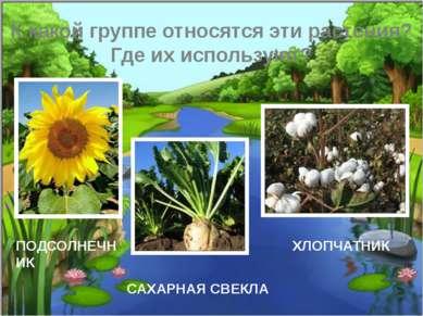 К какой группе относятся эти растения? Где их используют? ПОДСОЛНЕЧНИК ХЛОПЧА...