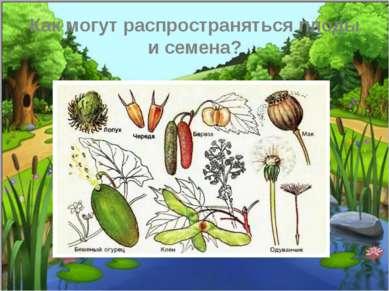 Как могут распространяться плоды и семена?