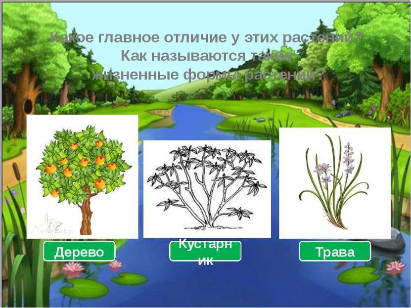 Какое главное отличие у этих растений? Как называются такие жизненные формы р...
