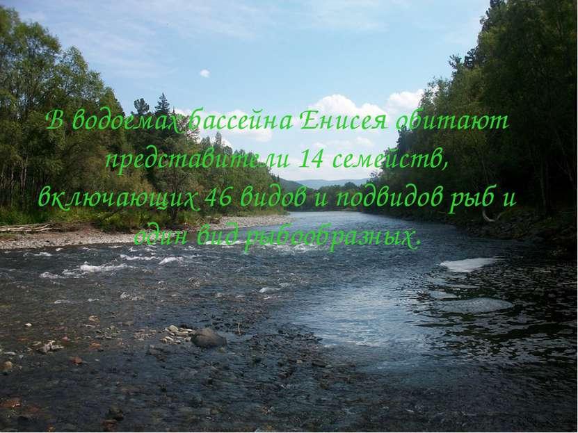 В водоемах бассейна Енисея обитают представители 14 семейств, включающих 46 в...