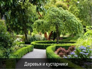 Деревья и кустарники