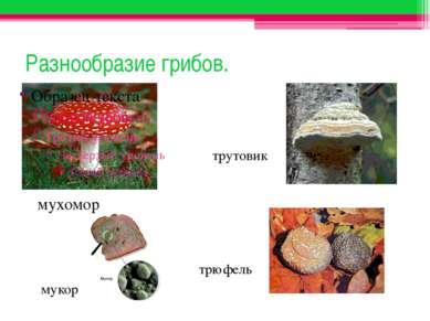 Разнообразие грибов. мухомор трутовик мукор трюфель