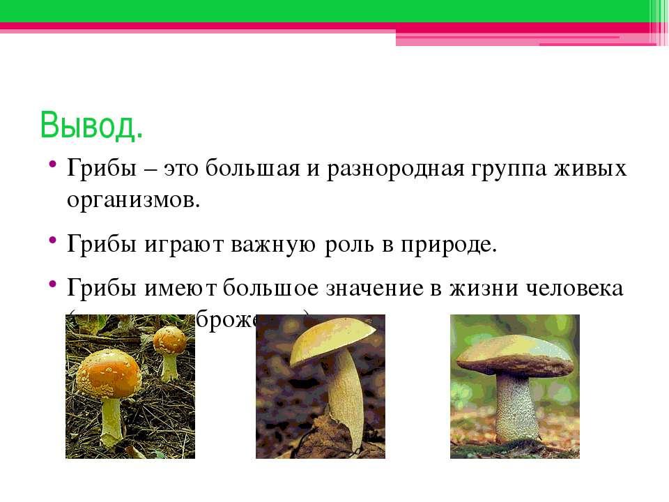 Вывод. Грибы – это большая и разнородная группа живых организмов. Грибы играю...