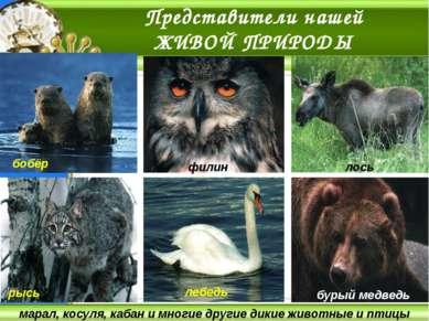 Наша гордость – башкирская пчела занесена в Красную книгу Башкортостана. Отли...