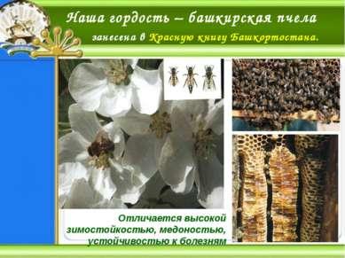 Пещера «Шульган-Таш» – единственная пещера в Восточной Европе, где хорошо сох...