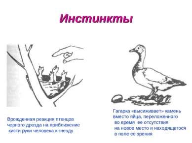 Инстинкты Врожденная реакция птенцов черного дрозда на приближение кисти руки...