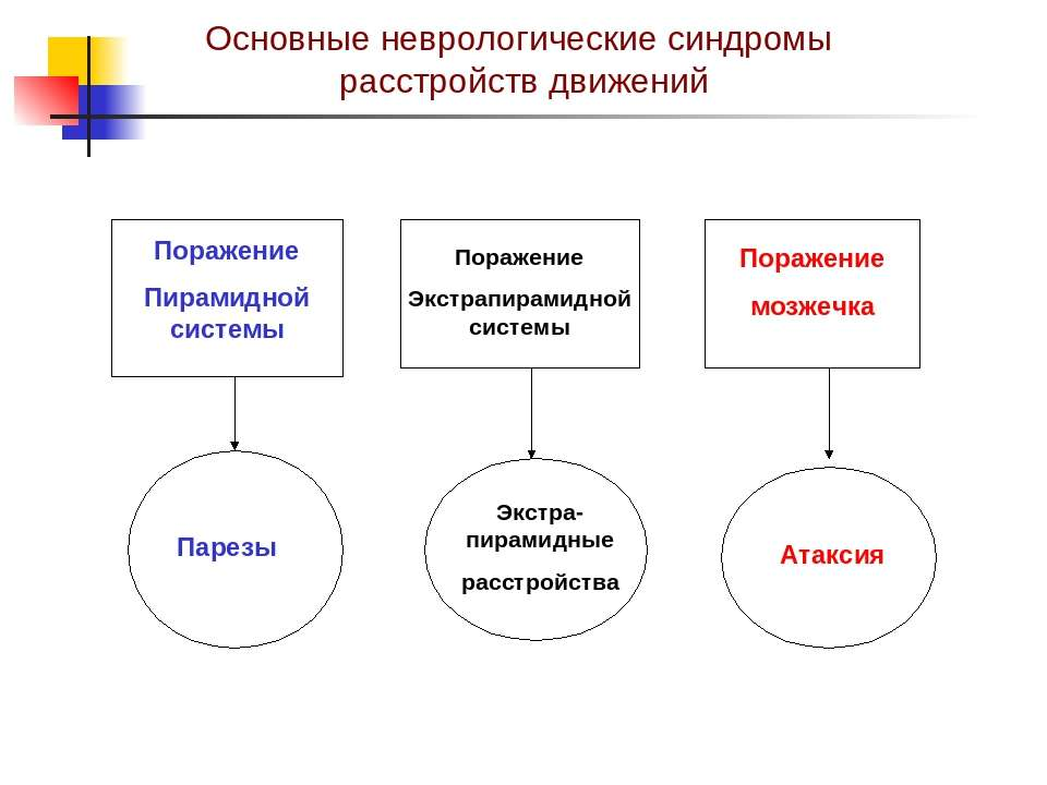 Основные неврологические синдромы расстройств движений Поражение Пирамидной с...
