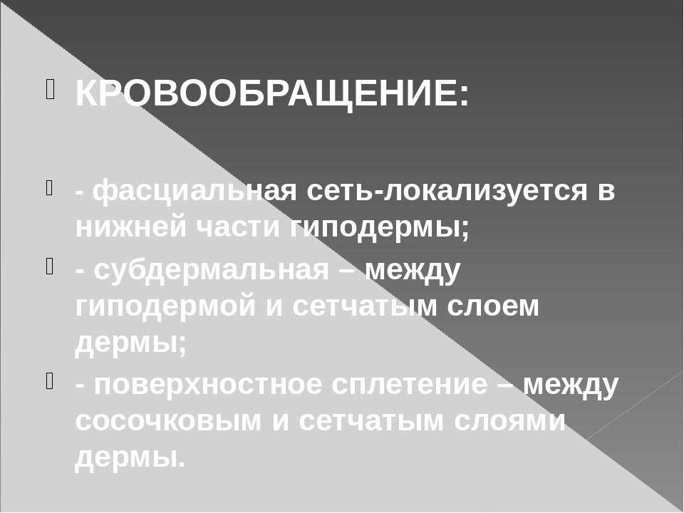КРОВООБРАЩЕНИЕ: - фасциальная сеть-локализуется в нижней части гиподермы; - с...