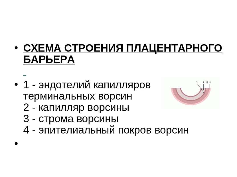 СХЕМА СТРОЕНИЯ ПЛАЦЕНТАРНОГО БАРЬЕРА 1 - эндотелий капилляров терминальных во...