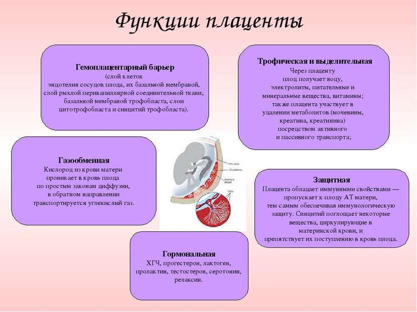 Функции плаценты Гемоплацентарный барьер (слой клеток эндотелия сосудов плода...
