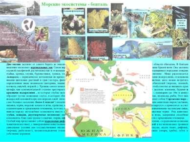 Дно океана заселено от самого берега до максимальных глубин, хотя еще недавно...